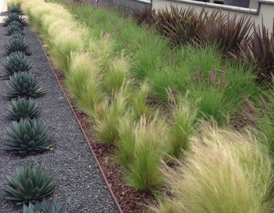 Drought tolerant for Best ornamental grasses for full sun